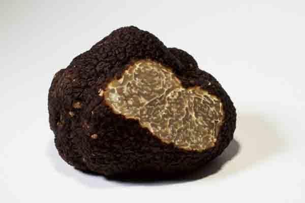 Black Perigord Truffle (Australia)