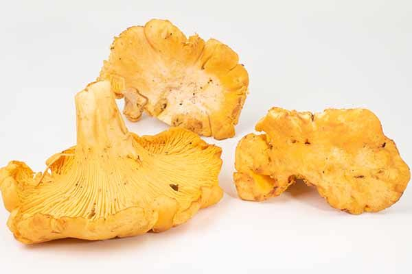Chanterelle, Imported
