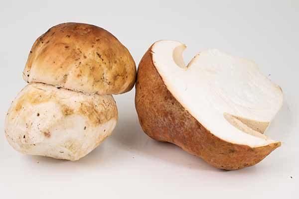 Porcini Mushrooms (Oregon, Washington)