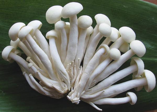 Shimejii White Mushrooms