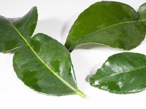 Lime Leaves, Fresh