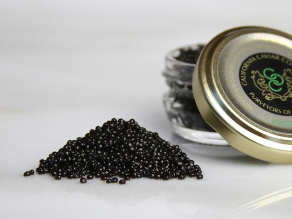 Caviar, Hackleback – Shovelnose Wild