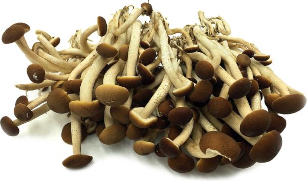 Velvet Pioppini Mushrooms